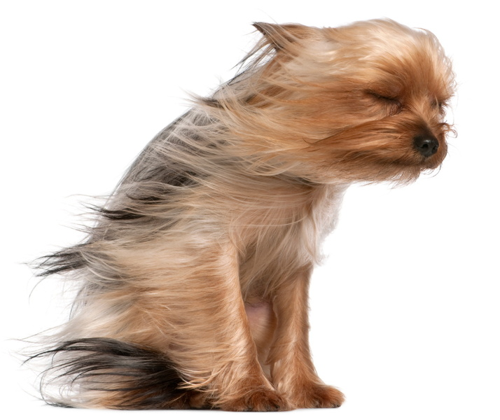 dog-in-wind